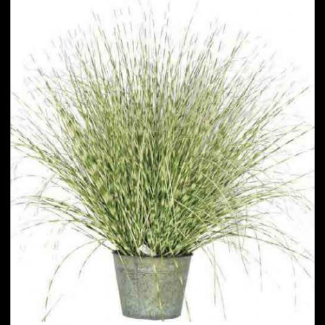 Tree Locate Zebra Grass In Metal Pot