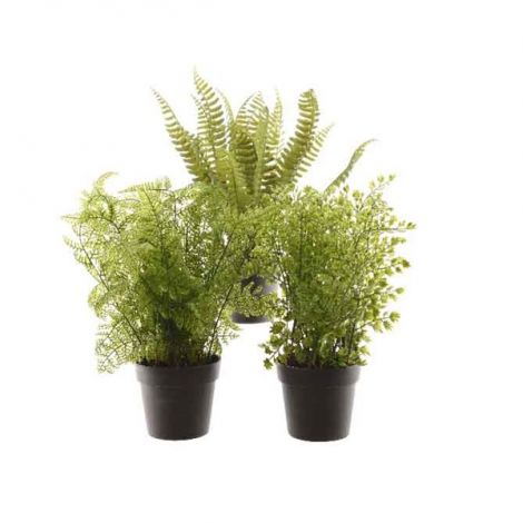 Kaemingk Fern Plant - Assorted