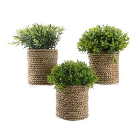 Kaemingk Potted Plants Assorted With Rope Pot