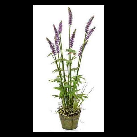 Tree Locate Purple Lavender