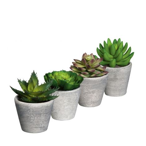 Edelman Green Succulent In Grey Pot