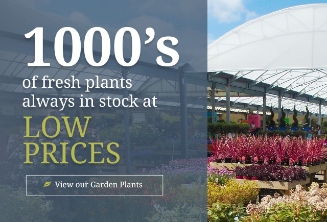 1000's of fresh plants always in stock at low prices